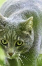"Warrior Cats ""Heiler Buch"" by parisfranzi"