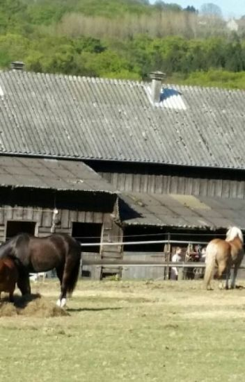 Mein Ponyhof Meinponyhof Wattpad