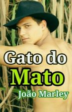 Gato Do Mato  by larifofing