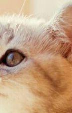 WARRIOR CATS-Deine Geschichte!  by OrangeWriter123