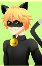 I'm Not Stopping |Chat Noir x Reader| by Killerdog387