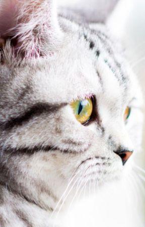 New pawsteps ( reader x warrior cats) - Tigerstar x reader