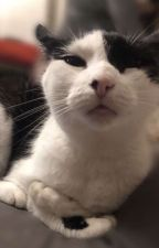 Anime!Gumball X reader by Fanfic_writing