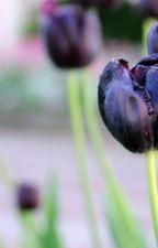 Tulip đen huyền bí by irisazure