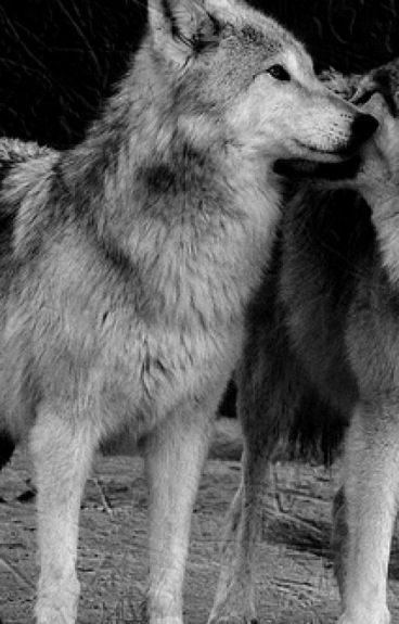 Wolf Possession , Alpha dominant