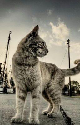 MyStory:How I Met My Cat