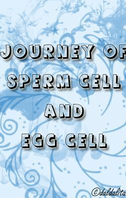Journey of Sperm Cell and Egg Cell