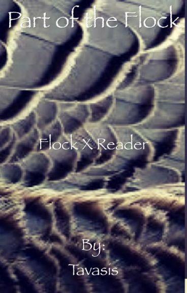 Part of the Flock- (Flock x Reader)
