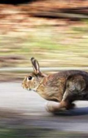 Hunny bunny. by Trishie14