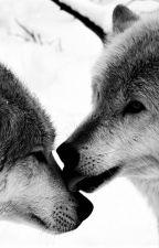 Deux loups. [BoyXBoy] by UnNuageDansLeCiel