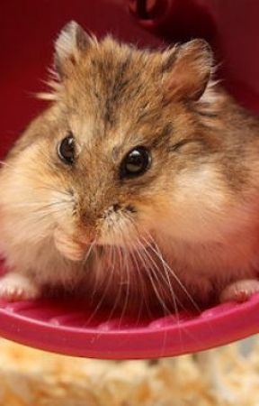 ThE NURTURE OF NATURE. - a tail of the furious hamsters!
