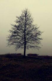 Trees  by _echo_princess_