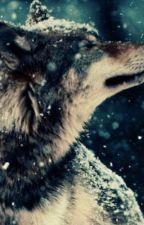 Gaster!Sans x Werewolf!Reader! by -_Koneko_-