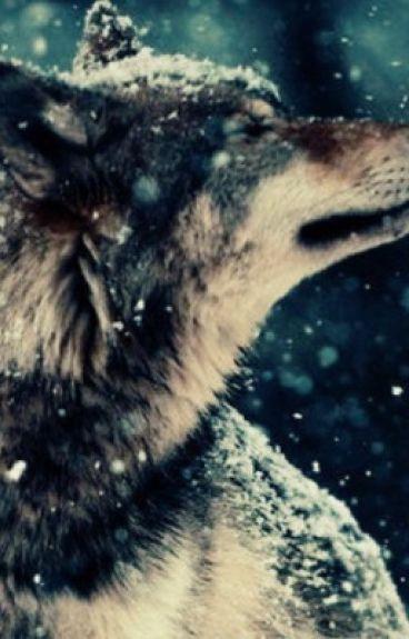 Gaster!Sans x Werewolf!Reader!