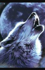 Divergent Werewolves by divergentlover25