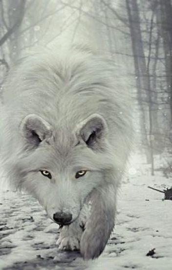the white wolf bxb