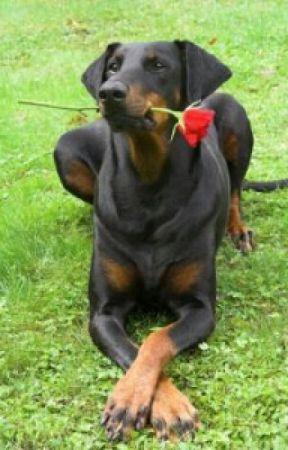 25 Cutest Animals - 17  Guinea Pig - Wattpad