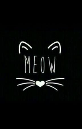 Meow Frases Renovação Wattpad