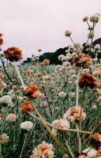 [NamJin] Toàn tâm toàn ý yêu em. by namtomyjin