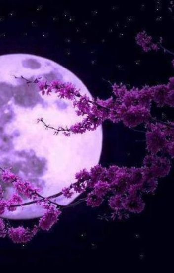The Moon that Fulls with Cherry Blossoms (サクラ ミツツキ)