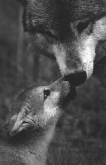 Baby Wolf  under editing