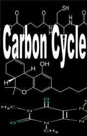 Carbon Cycle by donlou