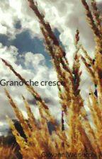Grano che cresce by GiovanniVannucchi
