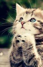 Funny Cute Cat Memes by icaandinna