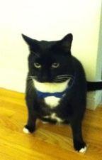 Warrior cats: Tornado's destiny by Veryfatcat123