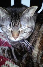 Marble, My Cat by Flowerstar483