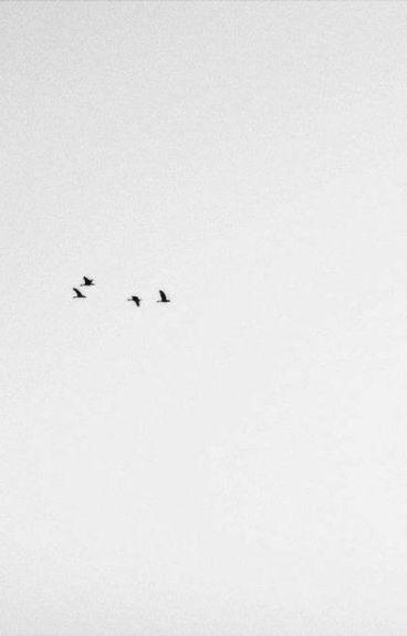 They Call Me Bird Man [MB/S]