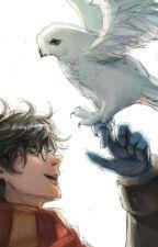 Immagini Divertenti Harry Potter by hermionegranger131