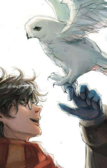 Immagini Divertenti Harry Potter