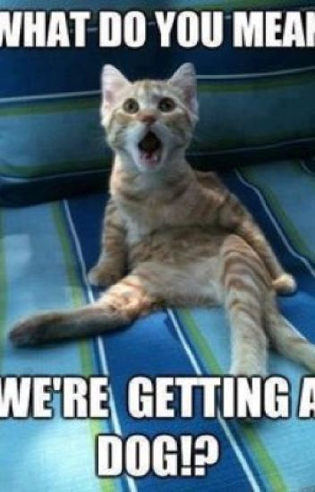Funniest Cat And Dog Memes