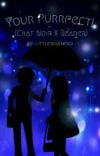 Your Purrfect! (Chat Noir X Reader) Story by littlemissdarkneko