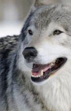 Wolf Pack rp  by OllieTheKiller
