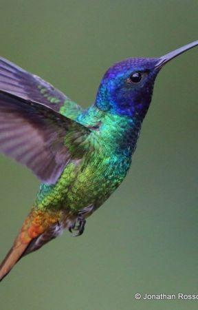 Her Little Hummingbird by TheWhovianTrekkie