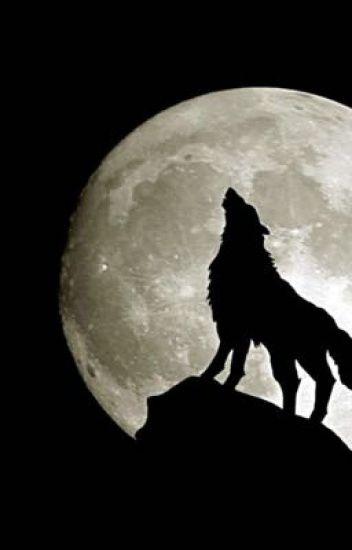 'Wolf Girl' Mithzan X Reader