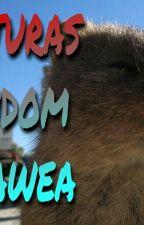Capturas Random Kisawea by DSInsane
