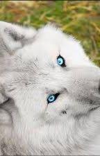 Gli occhi che non conoscevo by lupa-della-morte
