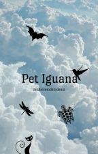 Pet Iguana by cekmecemdekideniz