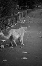 Chú mèo đã sống triệu đời - Sưu tầm  by _S-Girl_