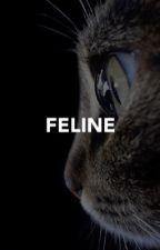 FELINE. [ d.grayson ] by margotsrobbie