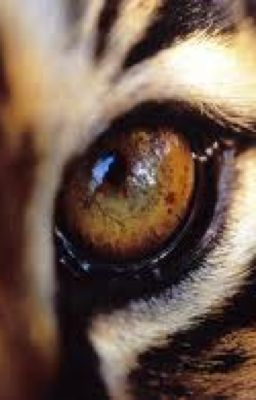 Eye of the tiger (Katy Perry)