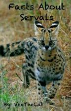 Facts About Servals by VeeTheCat