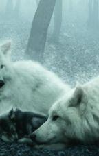 la cazadora y el lobo  by andreadifonix