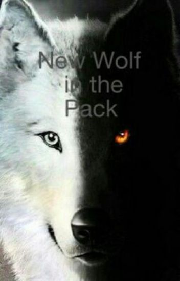 New Wolf in the Pack