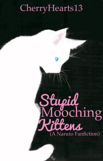 Stupid Mooching Kittens