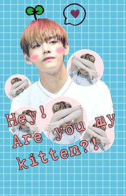 Đọc truyện [Series 1] [VMin] {Hey! Are you my kitten?!}