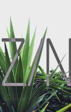Z/N by XdzidX